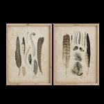 Set-quadro-piume-legno